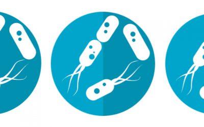 Què són els probiòtics?